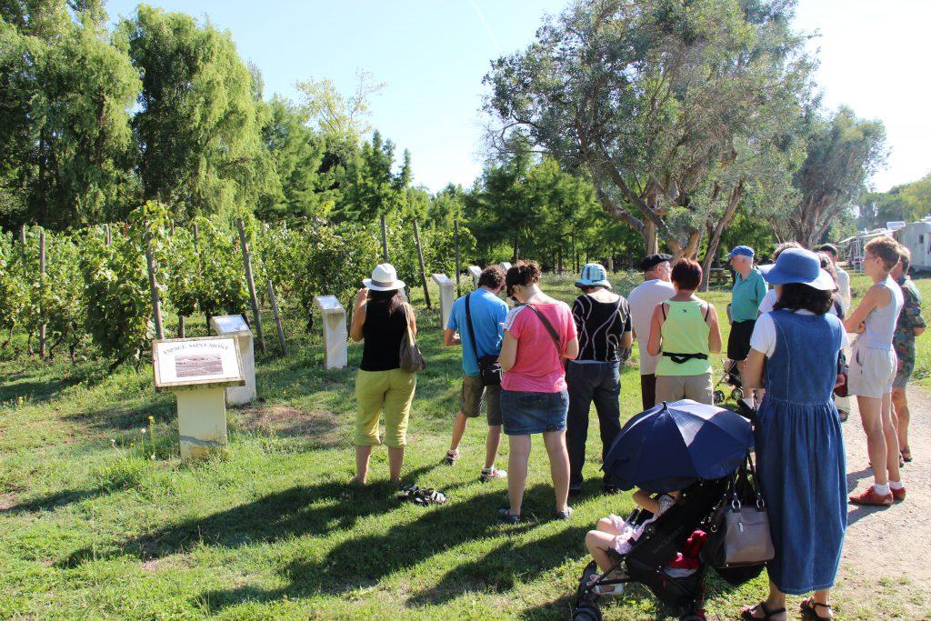 Groupe observant la parcelle de vigne