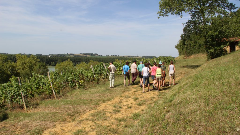 Balade en bord de vigne
