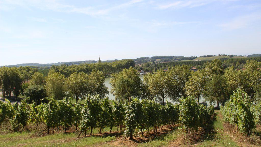 Paysage vigne Marciac