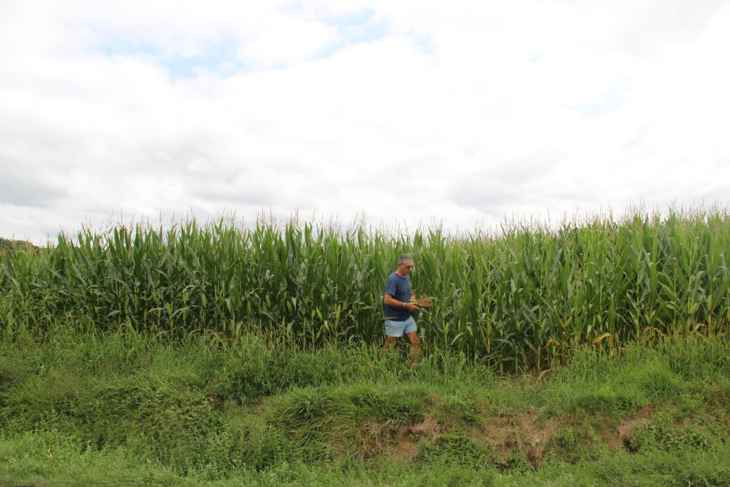 Christian Abadie devant son maïs