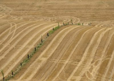 Plantation agroforestière